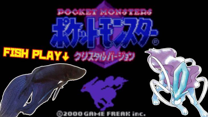 【こおりのぬけみち編│1919h~】ペットの魚がポケモンクリア_Fish Play Pokemon【作業用BGM】